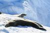 CRay-Antarctica-3006