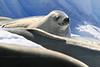 CRay-Antarctica-3007