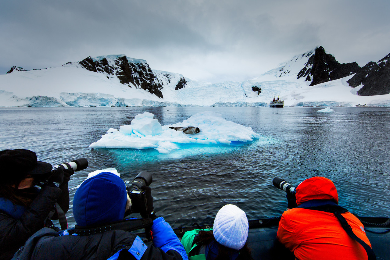 Approaching the Leopard Seal