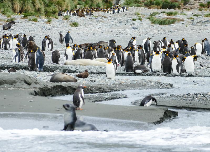 seals-penguins-cooper-bay