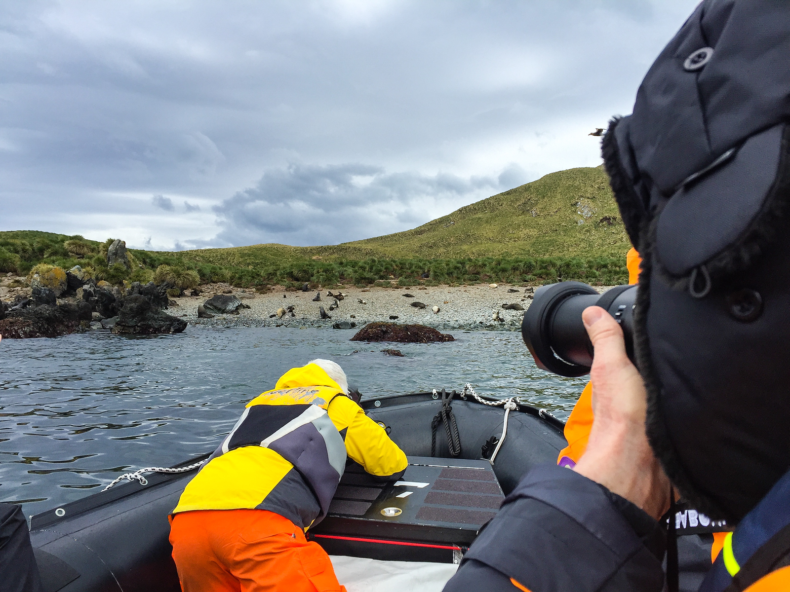 Photographing the wildlife of Cooper Island on a Seabourn cruise to South Georgia and Anatarctica.