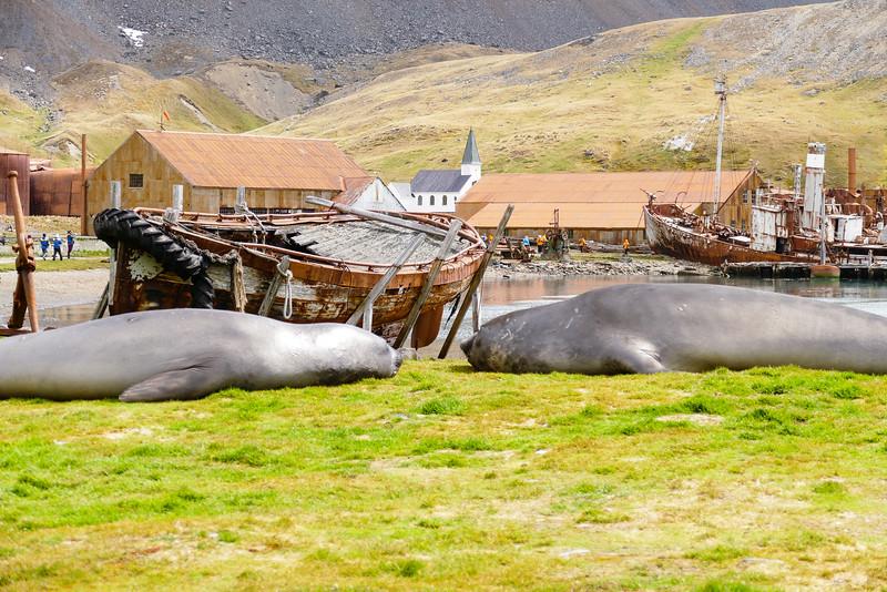 elephant-seals-boat-grytviken