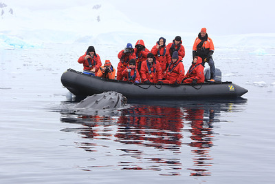 Antarctica - Jan 2013 - Sergey Vavilov Circle Trip, The One Ocean Expedition staff:   Graham's Zodiac and the great whale encounter.