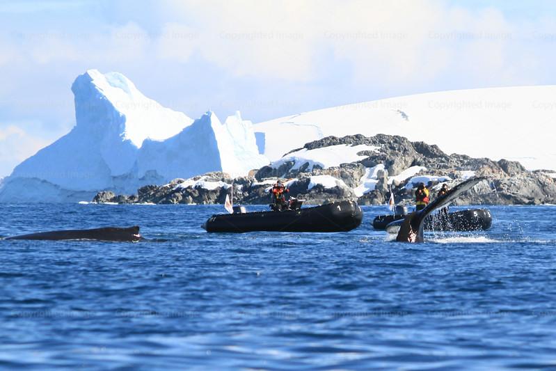 CRay-Antarctica-3021