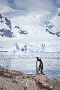 Antarctica-pebguins-wildlife-2