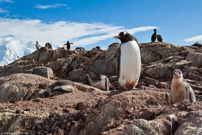 Antarctica-pebguins-wildlife-5