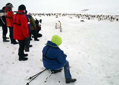 antarctica-weddel-sea-penguins-1