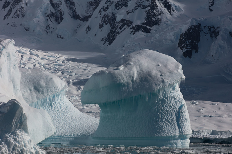 Iceberg Monkey