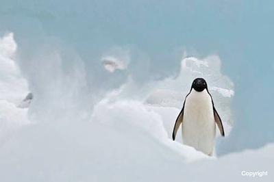 AntarcticaPauletI_AdeliePattheWindow_2250