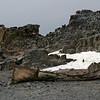 Abandoned dingy on Half Moon Island