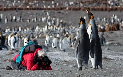 antarctica-south-georgia-photo-penguins-1