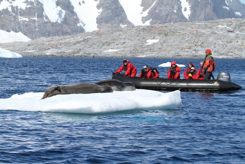 Watching leopard seals off Pleneau Island