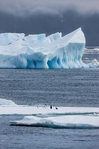 Penguins on ice sheet