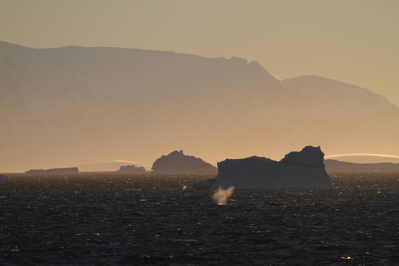 The blows of distant Humpbacks against a wonderful sunset