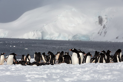Penguin Gathering