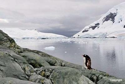 Antarctica_ParadiseHandGentooP_TheLastone_2541
