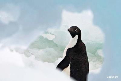 AntarcticaPauletI_AdeliePattheWindow_2240