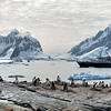 Gentoo Penguin Colony and Sea Adventurer
