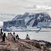 Petermann Penguin Colony and Iceberg
