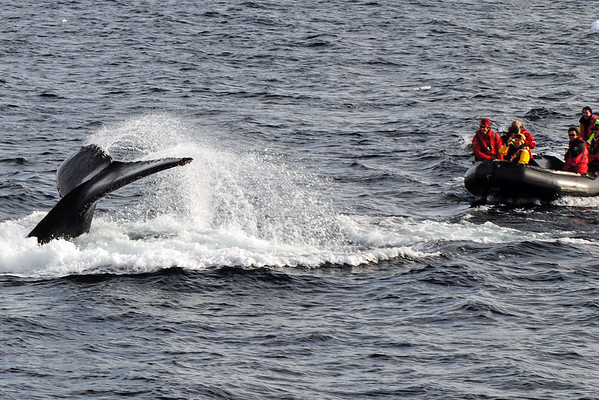 antarctica-whales-1