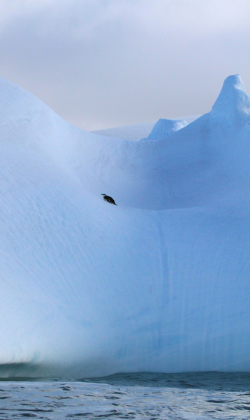 Chinstrap penguin on an exquisitely carved iceberg near Baily Head