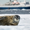 Crabeater Seal and Ship