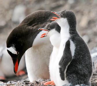 antarctica-penguins-1