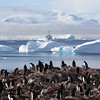 Gentoo Penguin colony with Antarctic scenery and the Akademik Ioffe