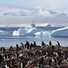 Gentoo Penguin colony with Antarctic scenery and the Akademik Ioffe