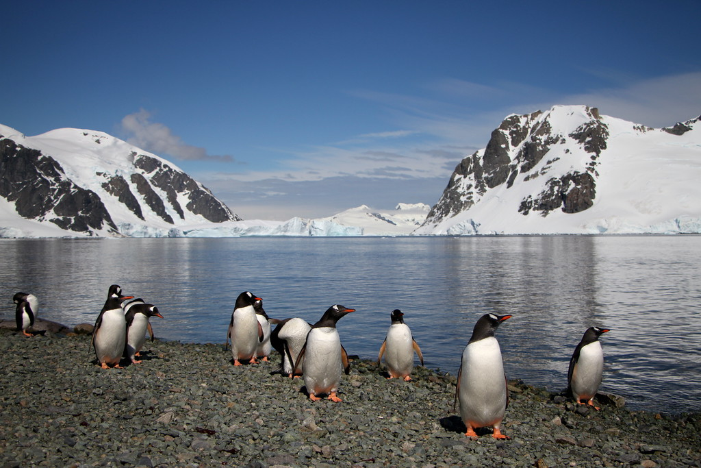 wildlife in antarctica
