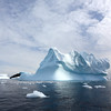Iceberg near the Argentine Islands