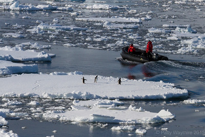 Adelie penguins and zodiac - February 3, 2015