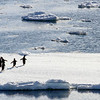 Adelie penguins on an ice slab.  They didn't like our ship gliding by them. - February 3, 2015