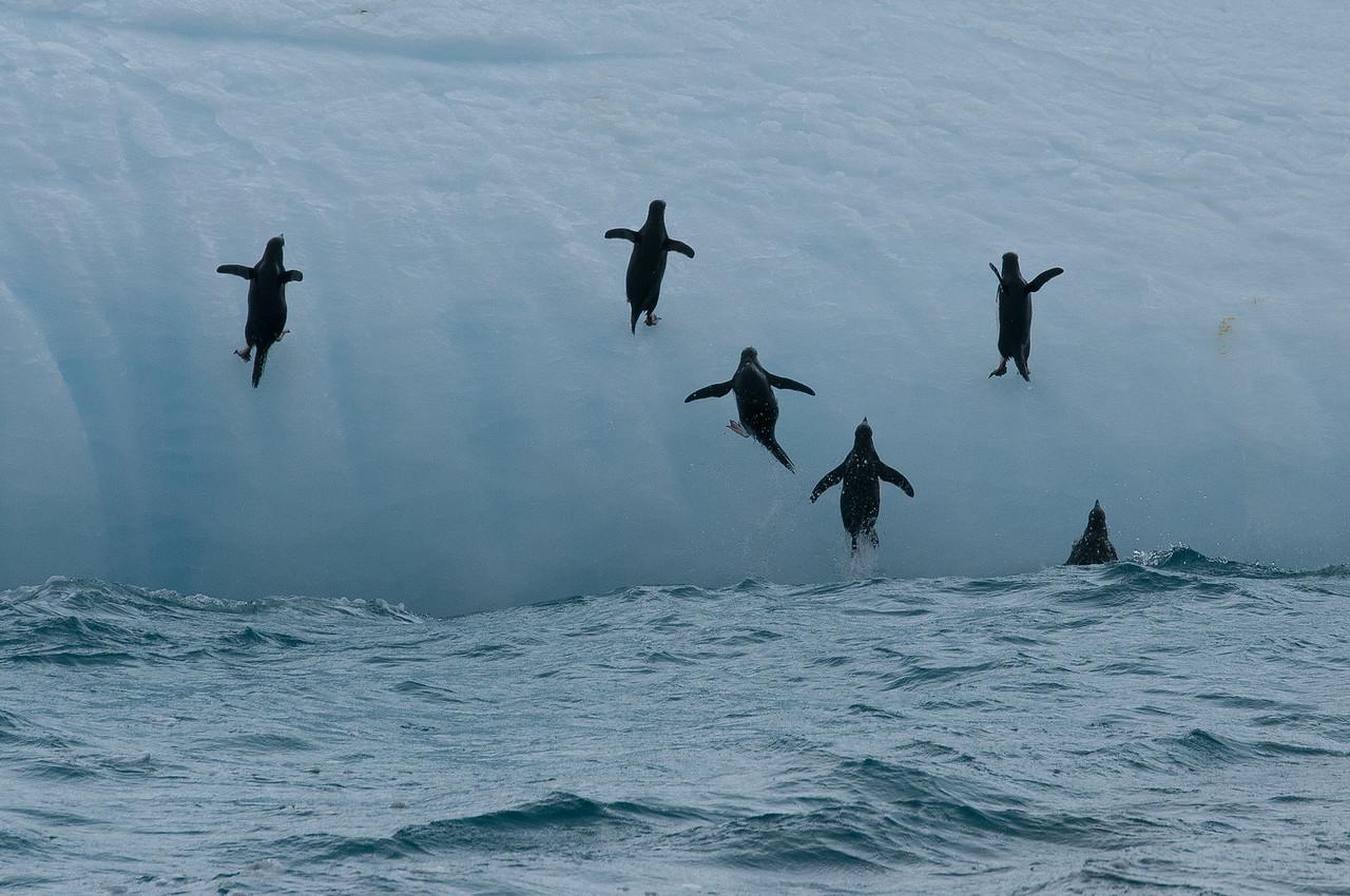 Chinstrap penguins on an iceberg near Elephant Island