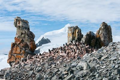Colony of penguin in Half Moon Island, Antarctica