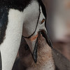 Antarctica and Subantarctic Islands : 8 galleries with 552 photos