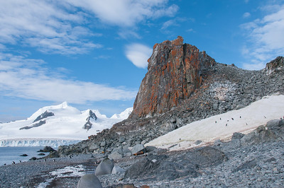 Chinstrap penguin near lichten covered in rocks - Half Moon Island
