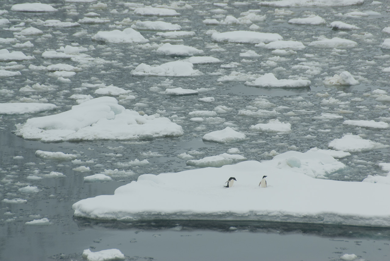 Adele penguins in an iceberg in Lemaire Channel, Antarctica