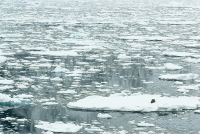 Sheets of ice in Lemaire Channel, Antarctica