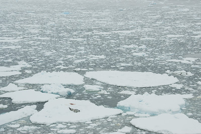 Sheets of ice all over Lemaire Channel in Antarctica