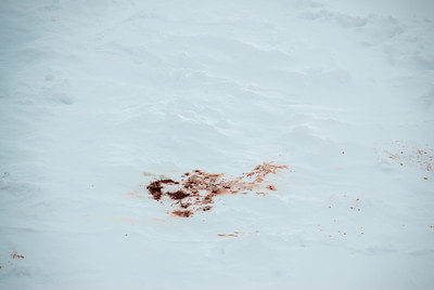 Blood stains in an iceberg in Lemaire Channel, Antarctica