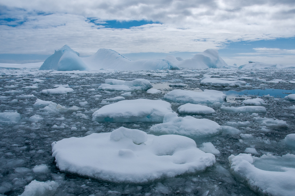 Floating Ice in Pleaneu Bay, Antarctica