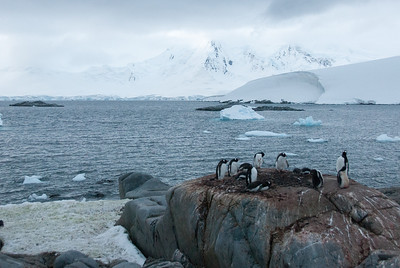Gento penguins at Port Lockroy