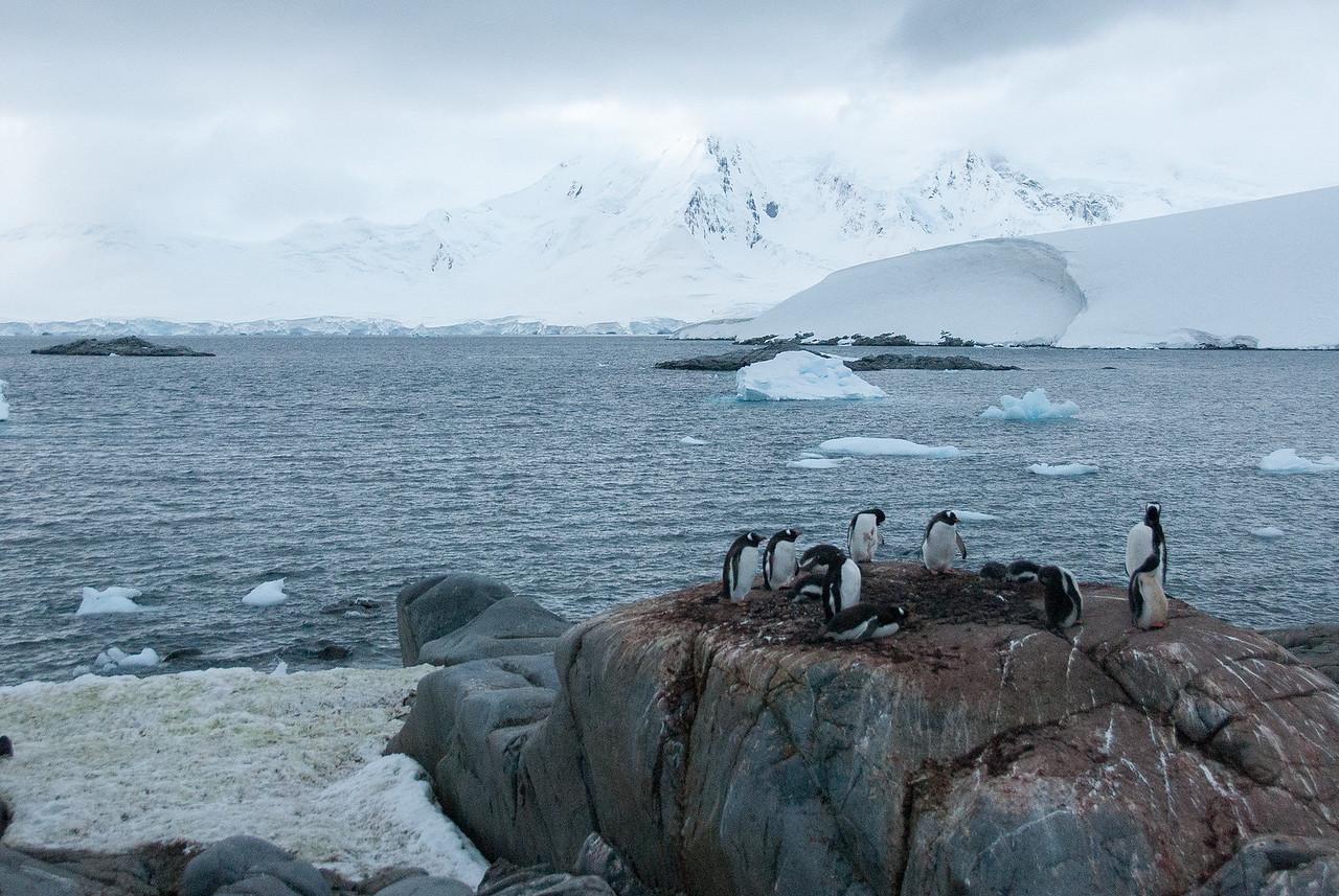 Gento penguins at Port Lockroy