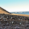 Paulet Island, at our first landing spot in the Antarctic Peninsula