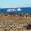 Our first landfall in Antarctica. View from Paulet Island across the Adelie Penguin colony towards the sea.