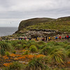 People on our expedition settled in taking photographs of the albatross/penguin colonies along the coastline of New Island, Falklands Islands