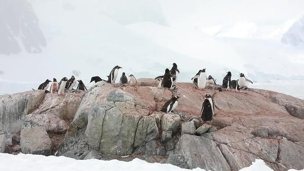 Pinguine - Lemaire Strait