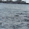 Antarktis - Tauchende Pinguine