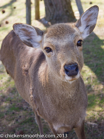 Antelope, Deer, Giraffes etc